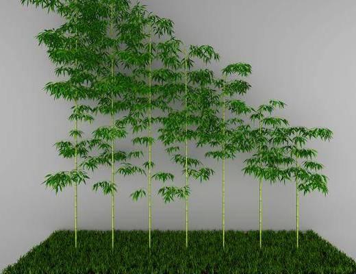 竹子, 植物