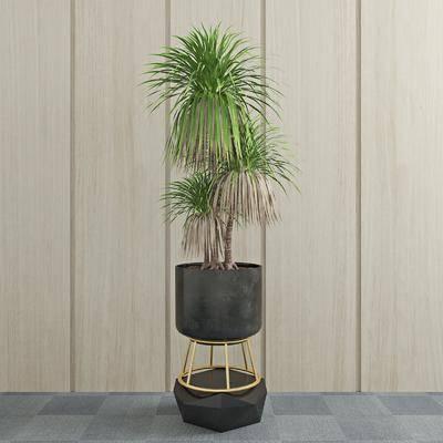 盆栽, 绿植, 现代植物盆栽, 现代