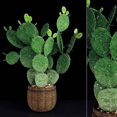 现代, 植物, 盆栽, 摆件