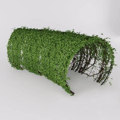 藤蔓, 綠植, 現代