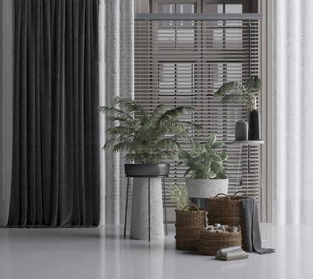 盆栽, 植物, 窗帘, 盆景, 绿植
