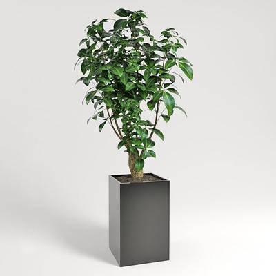 植物, 盆栽, 现代, 盘栽