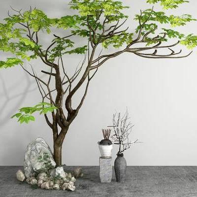 树, 植物, 树木
