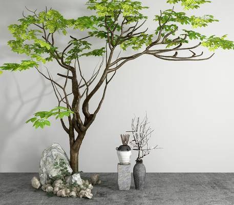 树, 植物