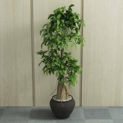 盆栽, 植物, 绿植, 现代盆栽, 现代, 室内