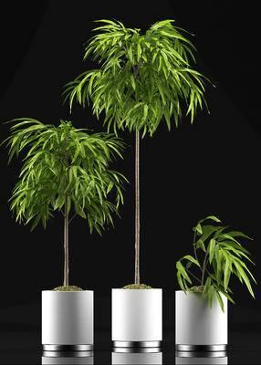 现代简约, 植物盆栽, 组合, 现代植物