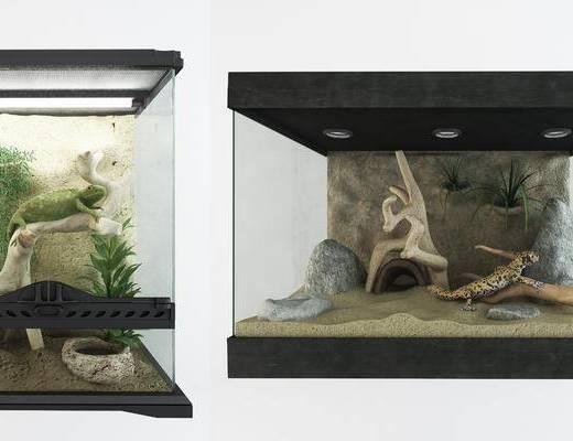 变色龙宠物缸, 鱼缸, 摆设品, 装饰品, 蜥蜴, 动物