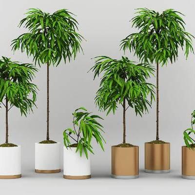 现代, 绿植, 植物, 盆栽