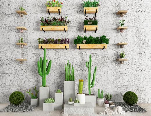 植物, 盆栽, 绿植, 仙人掌