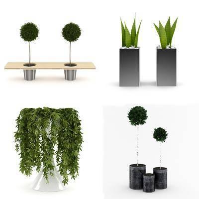 花瓶, 花卉, 盆栽, 植物, 树木, 现代