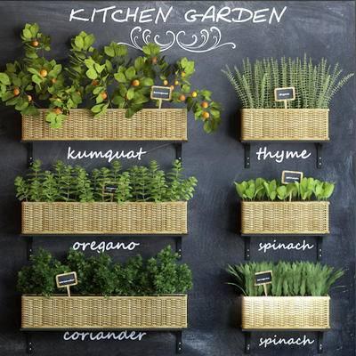 墙饰, 盆栽, 植物, 美式