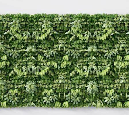 现代植物墙, 植物墙, 绿植墙