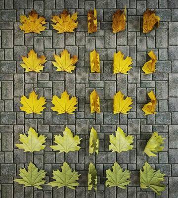 枫叶落叶模型, 树叶模型, 叶子