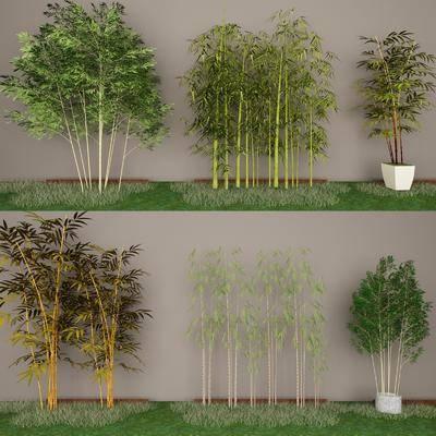 现代竹子, 竹子, 绿植, 现代
