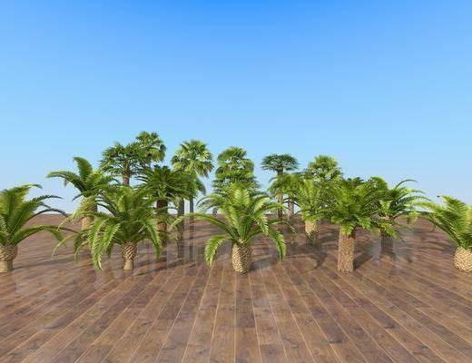 熱帶樹木, 樹木