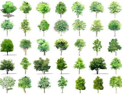 树木, 乔木, 灌木