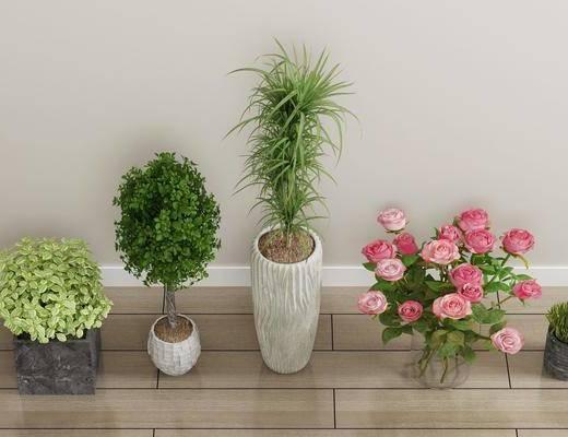 盆栽, 绿植植物, 花卉, 现代