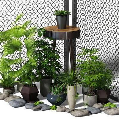 植物, 盆栽, 园景, 铁丝网