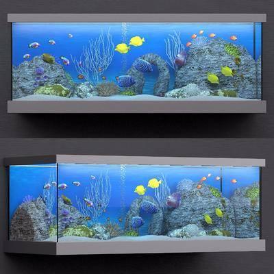 鱼缸, 植物, 鱼, 现代