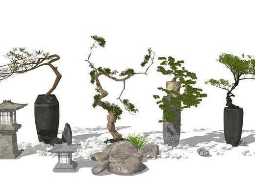 盆栽植物, 盆景, 植物