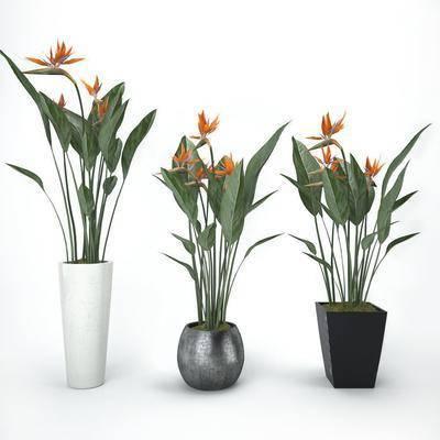 盆栽, 花盆, 植物, 花, 现代