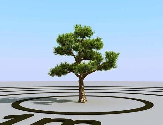 树木, 植物, 绿植, 现代树木, 树叶, 现代