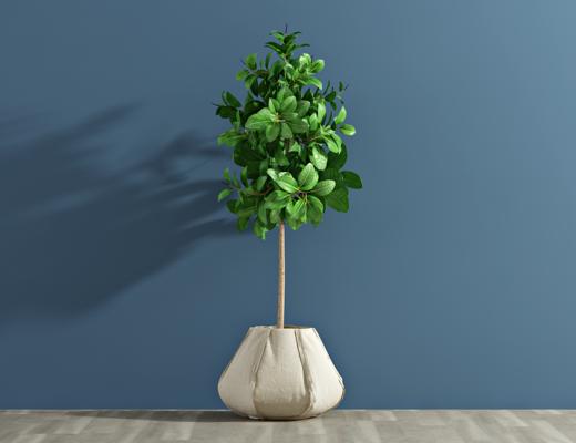 现代盆栽, 植物, 绿植
