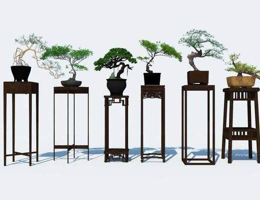 盆栽, 植物, 装饰品