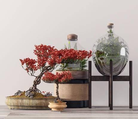 盆栽, 植物