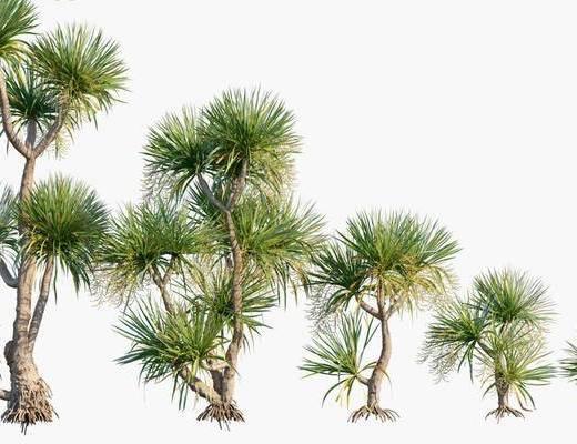 現代, 植物, 花草, 單體