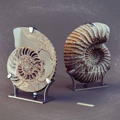 摆件, 海螺, 化石, 现代