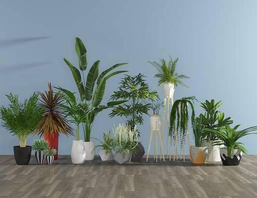 现代陶瓷绿植, 盆栽, 植物