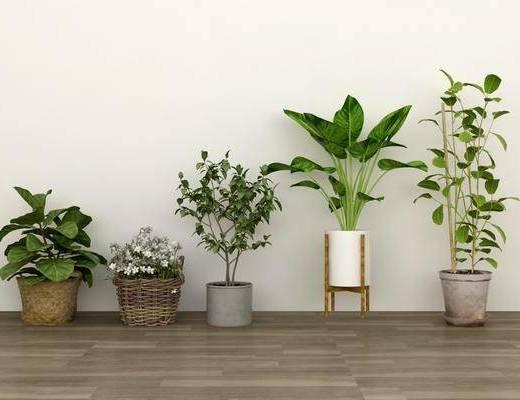 现代盆栽, 盆栽, 绿植
