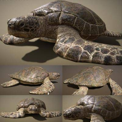 海龜, 爬行動物, 現代