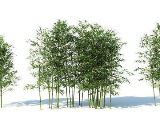 现代, 树, 竹子