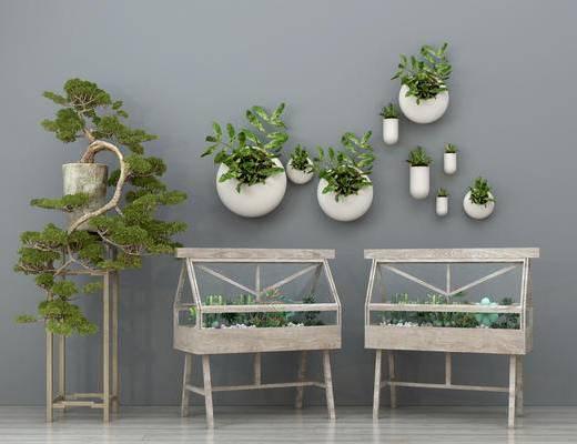 现代盆栽, 多肉植物, 松景盆景, 墙饰, 植物墙饰, 装饰品摆件