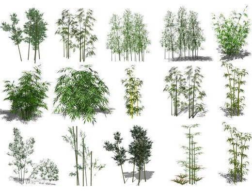 植物, 竹子