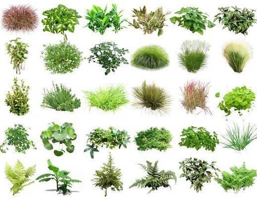 花卉灌木, 花草, 植物组合