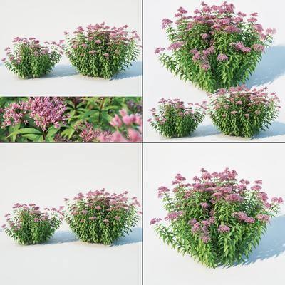 灌木植物, 绿植植物, 花卉, 现代