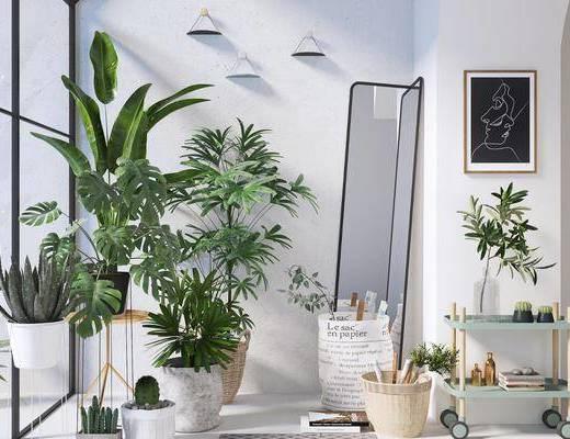 现代, 盘栽, 植物, 装饰架