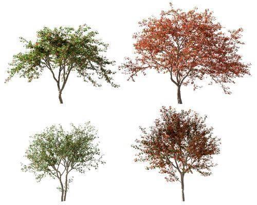 現代, 植物, 樹木, 擺件