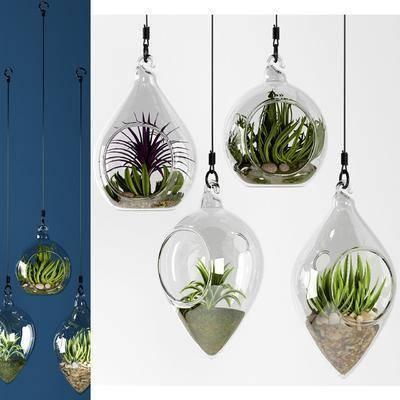 盆栽, 吊饰, 植物, 多肉植物, 摆件, 吊件, 现代