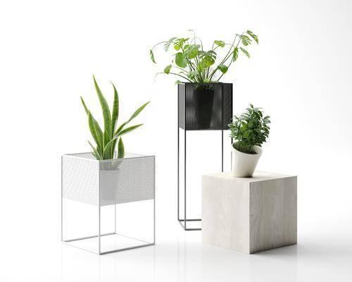 盆栽绿植, 装饰架, 现代