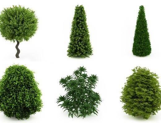 植物, 灌木, 树木, 现代