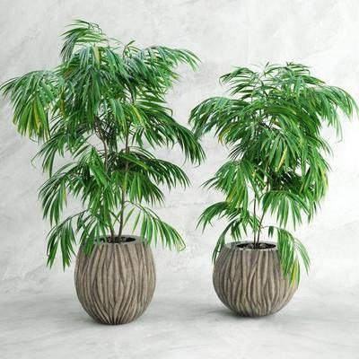 盘栽, 植物, 花盆, 现代