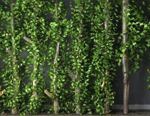 藤蔓, 植物