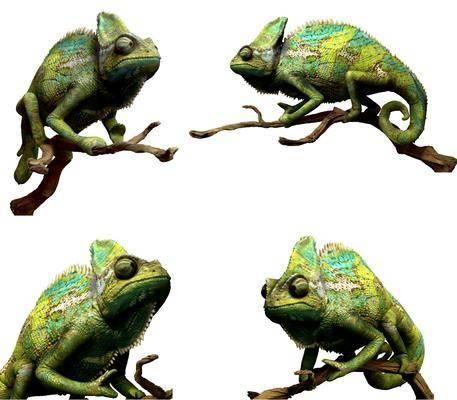 现代动物, 蜥蜴, 爬行动物