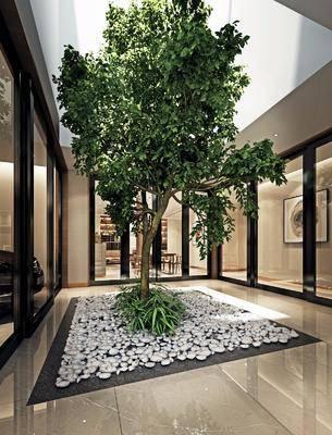 花园, 景观, 室内花园, 现代, 树, 石头