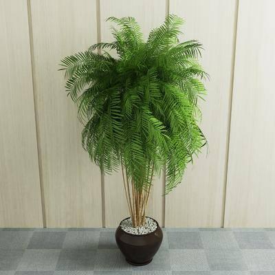 盆栽, 植物, 现在植物, 现代盆栽, 现代, 室内