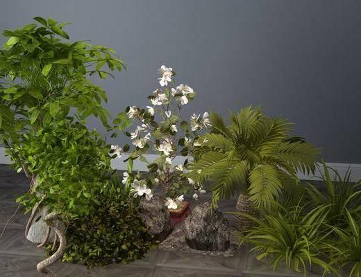 花草, 植物, 花丛